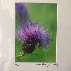 Purple Wild Flower Photograph Signed & Numbered